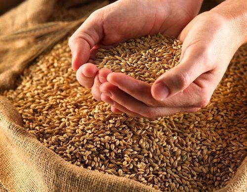 2021小麦最新价格与走势分析!