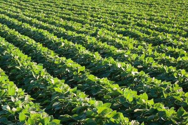 大豆田除草剂配方,什么时候打除草剂好