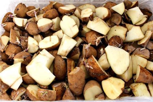 春季土豆种植技术与管理