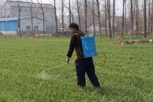 小麦除草剂什么时候打合适?