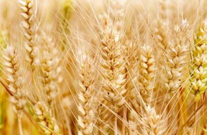 2021年2月22日全国部分地区今日小麦价格行情走势