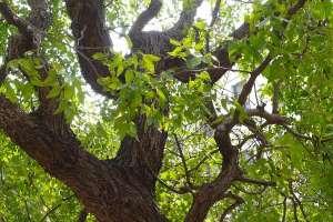 枣树施肥的时间是几月份,开花期间能不能施肥?