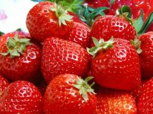 冬季草莓为什么出现僵化果?