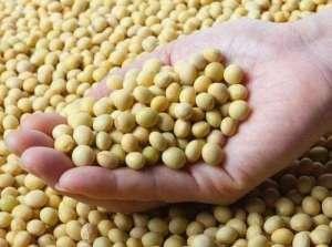 2021年3月11日全国各地今日大豆价格行情