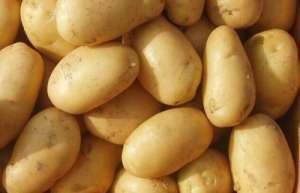 2021年3月11日全国各地今日马铃薯价格行情