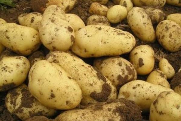 马铃薯追肥时间,用什么肥料更好