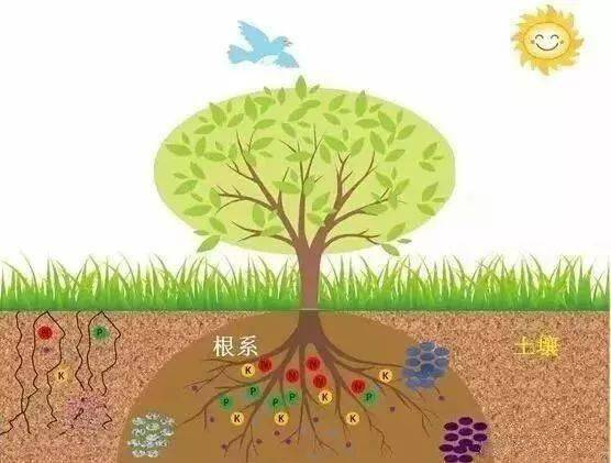 土地肥不肥,关键看它,比氮磷钾更重要!