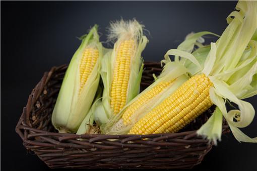 膜早糯玉米种植时间-摄图网