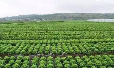 农业死穴:原来种植面积超过这个数,直接亏到吐血?