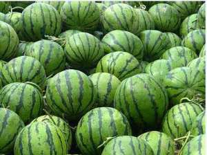 种西瓜用什么肥料好?