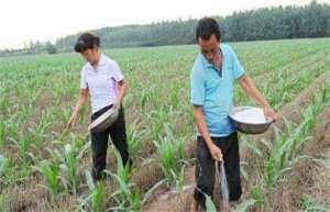 玉米的施肥要点有哪些?