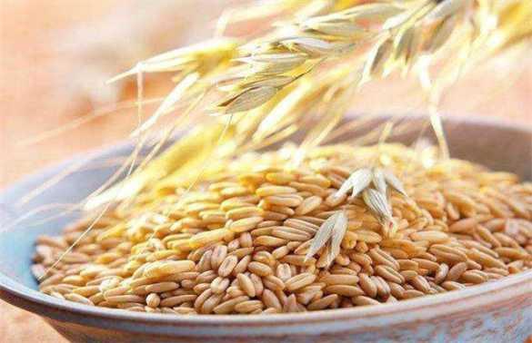 如何提高燕麦种子发芽率