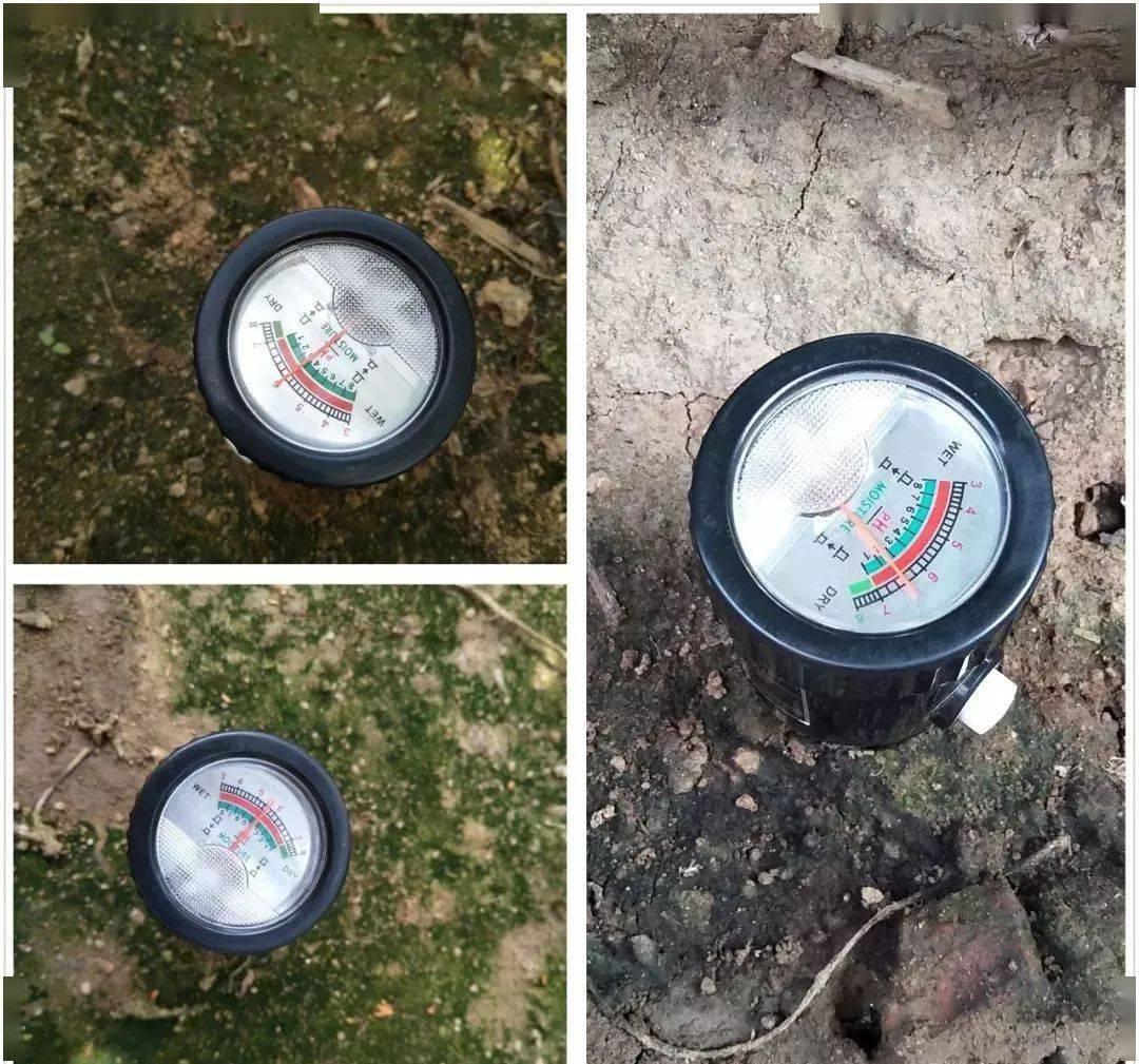 土壤青苔的形成原因?
