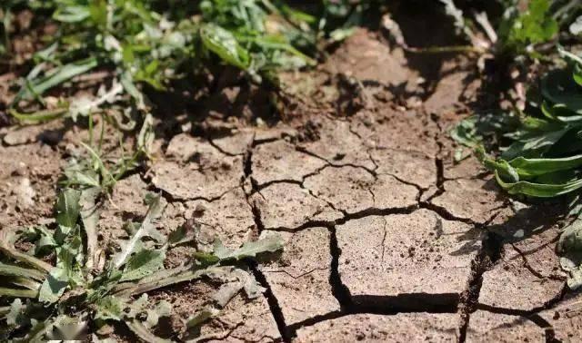 """""""土壤板结""""怎么办?"""