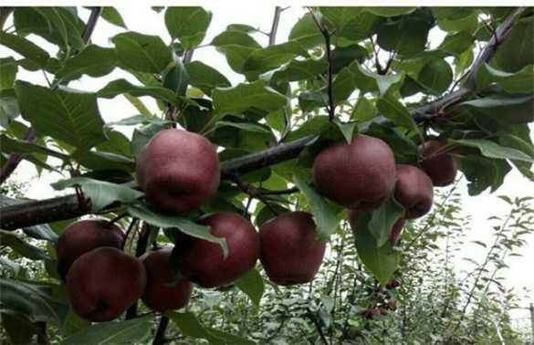 如何提高果树的坐果率