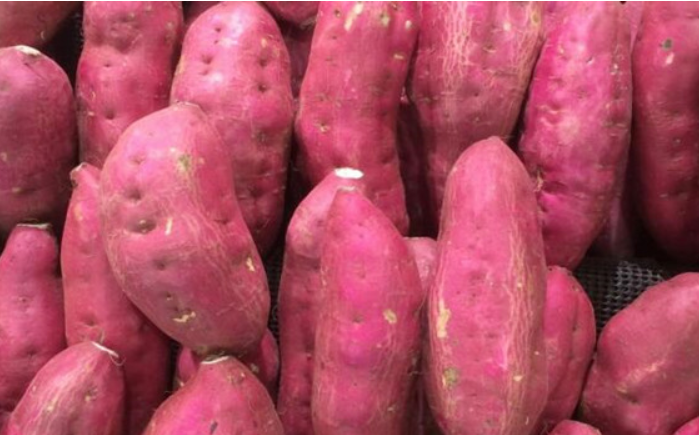 紫薯种植技术与管理方法