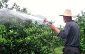 番茄叶面肥喷施注意事项和施用方法